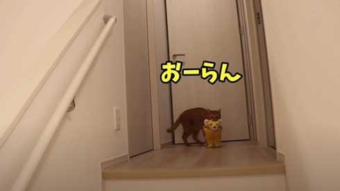 寂しくて ぬいぐるみ 一緒 飼い主を探す 猫 かわいい