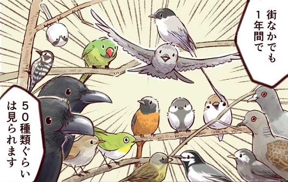 身近な鳥の生きざま事典 野鳥 身近な鳥 観察 一日一種