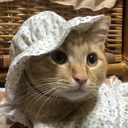 お洋服ネコちゃん