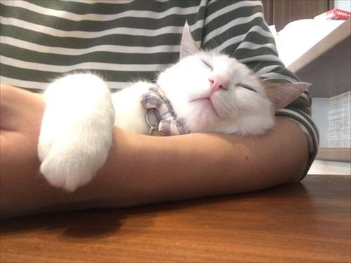 夜更かしに付き合ってくれる猫ちゃん