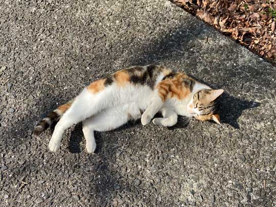 猛獣 軍団 囲まれ 命からがら逃げてきた 野良猫 集合 たくさん