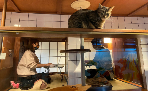 猫旅籠ワーク