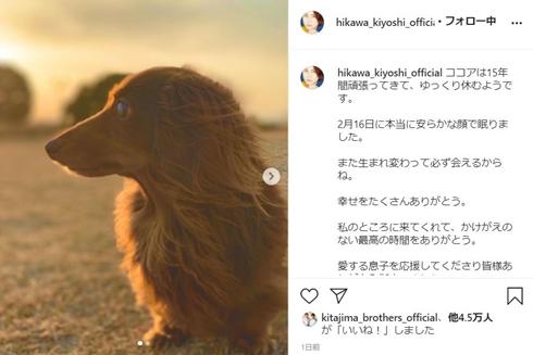 氷川きよし ココア ダックス 逝去 愛犬