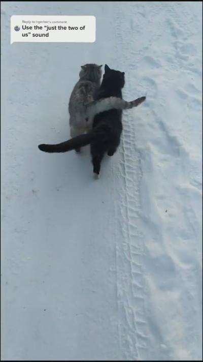 雪でもあったかネコちゃんたち