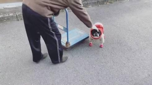 じいちゃんと犬 ノボルとりく 台車ドライブ