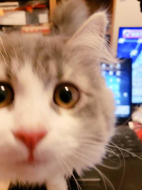 在宅 邪魔 猫 どうやって 仕事 パソコン 乗る サイベリアン