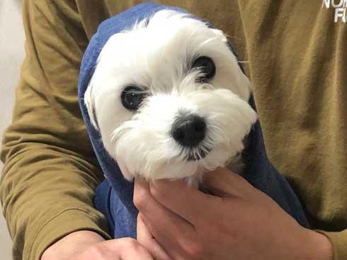 マルプー バイオハザード 犬 表情 顔