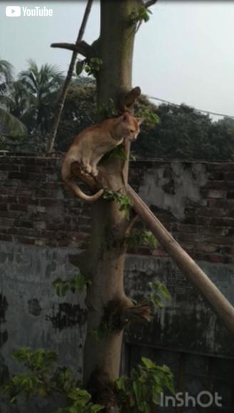 木の上から救出される子猫