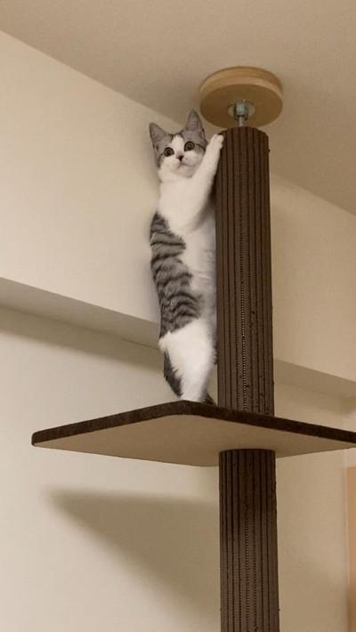 びっくりしちゃったネコちゃん