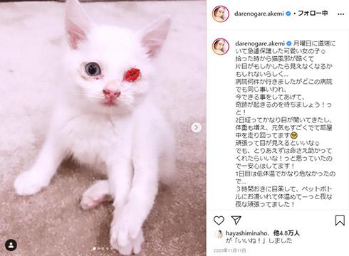 ダレノガレ明美 メイちゃん 子猫 保護