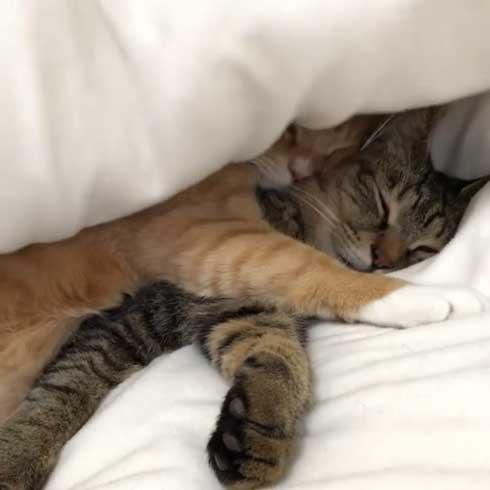 猫 すねてる理由 お兄さん 添い寝 仲良し 3匹 兄弟