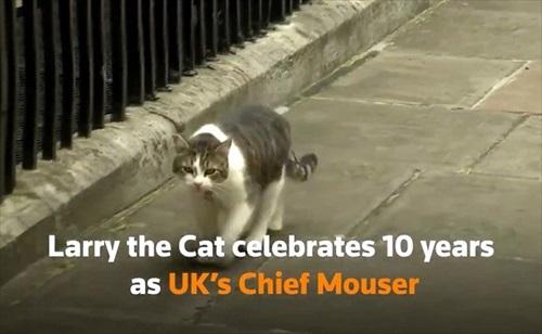 イギリス首相官邸のネズミ捕獲長ラリー