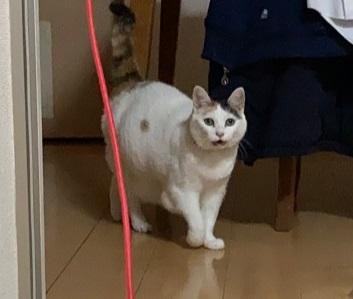 猫 次のステージ キキちゃん