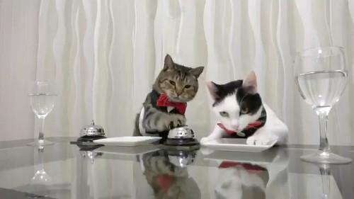 窓 美しすぎて 泣けてきた 猫 2匹 ねこナビ編集部