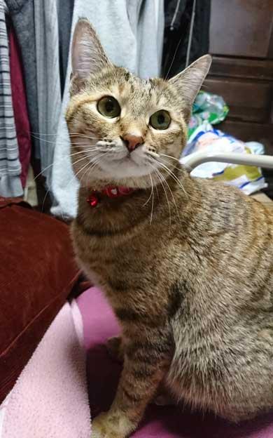 猫 動物病院 写真 サービス 指名手配 注射 直前 怯え 顔