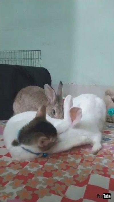 「Cat Helps Clean Bunnies || ViralHog」