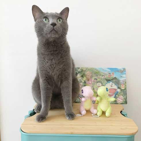 手乗り 子猫 保護 成長 猫