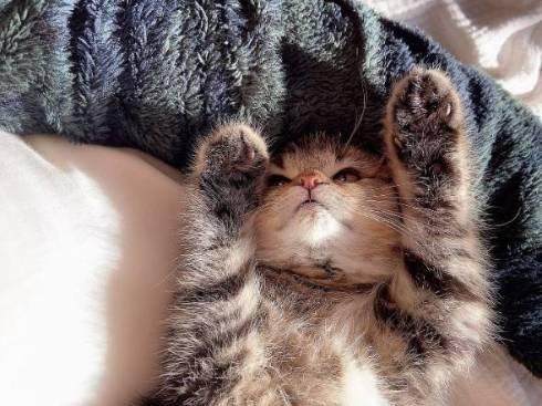 子猫 くっついて寝たい どんぐり君