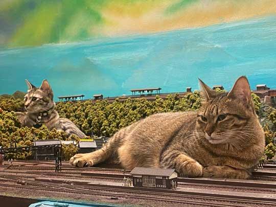 猫 お母さん 寝ている 列車 運休 ジオラマ 食堂 巨大 保護猫