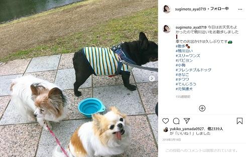 杉本彩 愛犬