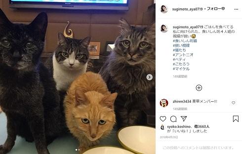 杉本彩 愛猫