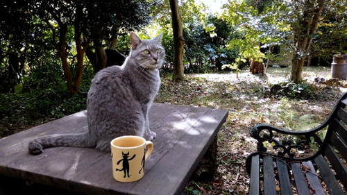 森の猫カフェ