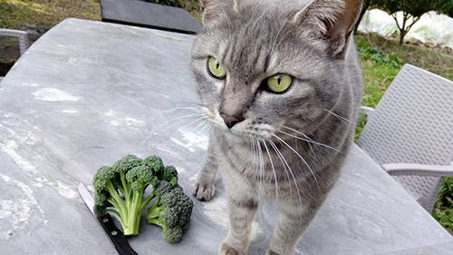 ブロッコリーと猫ちゃん