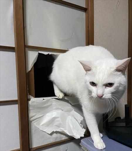 入口じゃないところから入る猫ちゃん