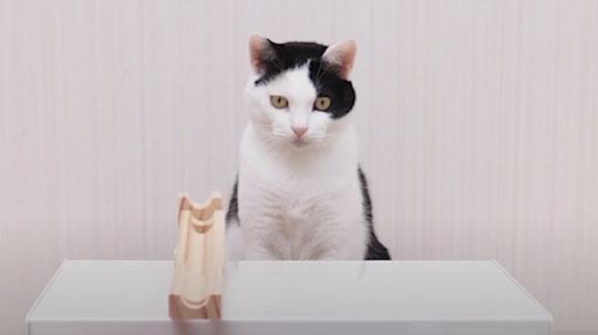 猫 ピンポン玉 トリックショット 動画 ねこナビ ねこナビ
