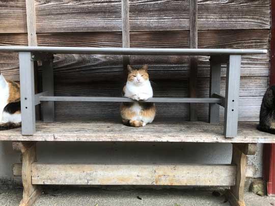 猫 バー 前足 バーテンダー 須藤牧場