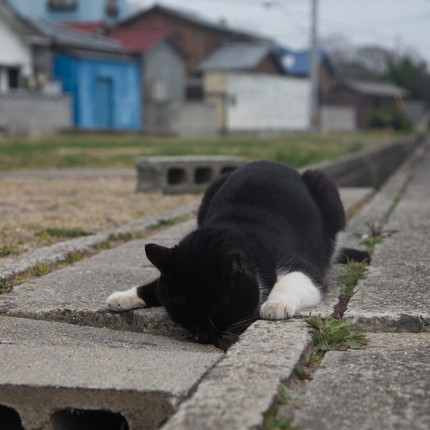 「必死すぎるネコ展」