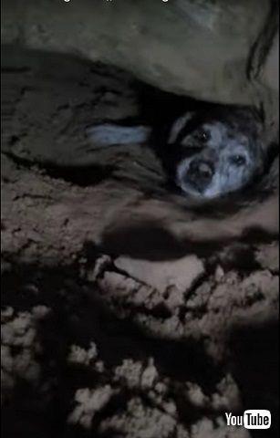 床下ワンコ