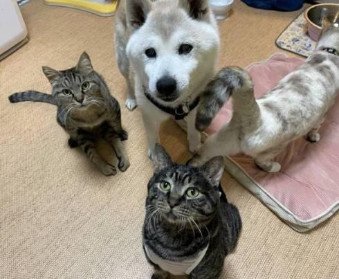 犬のおじいさん 小次郎くん 猫のおじいさん トウジくん