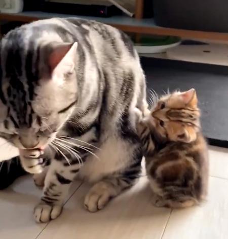 パパを見つめる子猫