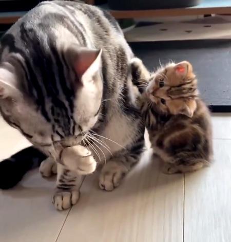 前脚を出した子猫