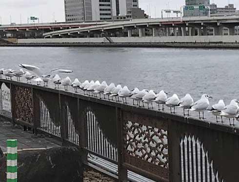 整列 鳥たち カモメ 並ぶ 一列