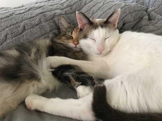 忍者 天井 張り付いて 保護 猫 伸び