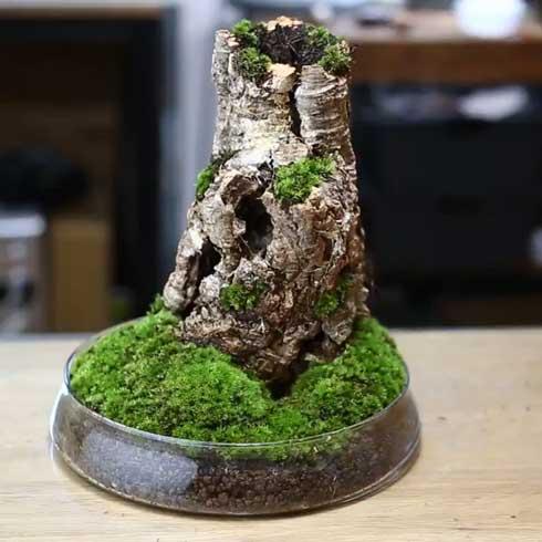 きのこリウム 笠を開いた なめこ 立派 キノコ 盆栽