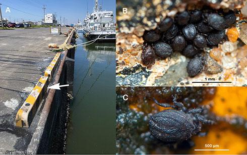 港の写真とダニの拡大写真