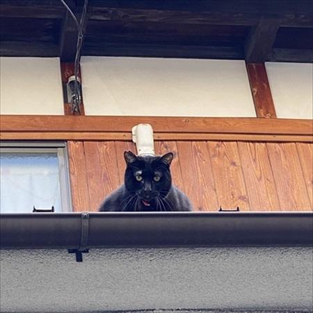 コックに見えた近所のネコちゃん