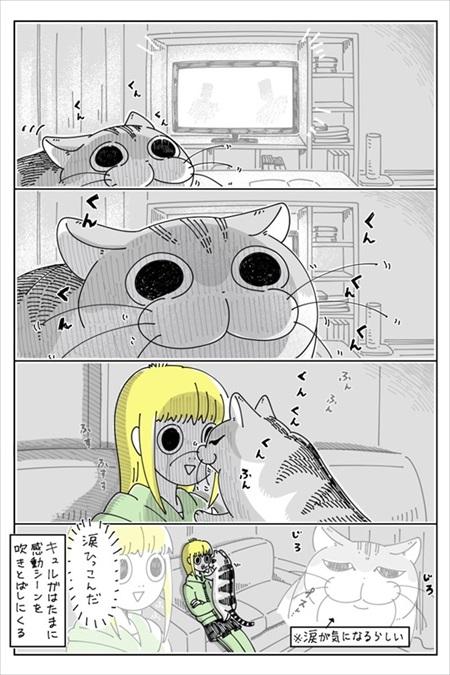 感動シーンに寄ってくる猫ちゃん