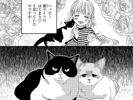 一目ぼれした保護猫を迎えた話
