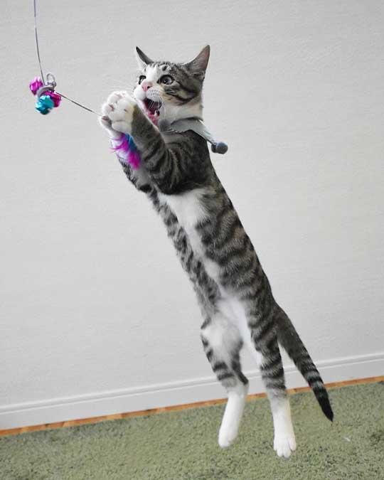 宇宙人にさらわれる瞬間 猫 浮いてる アブダクション キャトられ