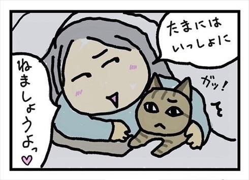 全身で嫌がる猫ちゃん