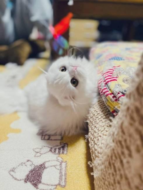 猫 文句言いたい ちゅ〜る食べたい 月ちゃん