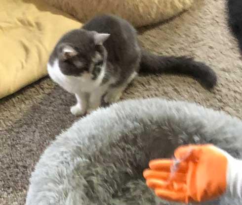 猫 顔 表情 不満 おこ 余計なことすんな プロ 掃除 抜け毛