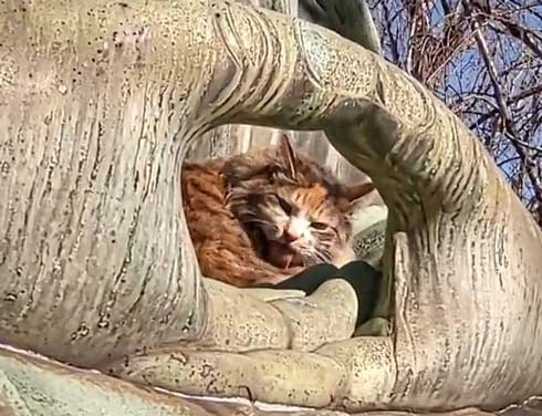お釈迦様 愛される 猫 日なたぼっこ お昼寝 膝の上 御手 包まれて
