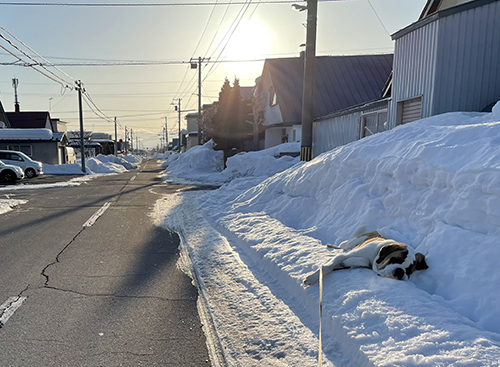 雪と昼間のダンテくん