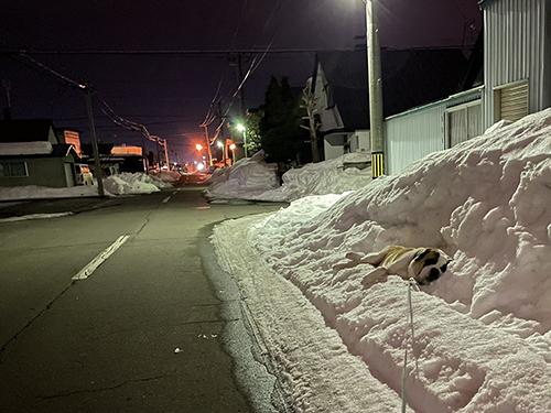雪と夜のダンテくん