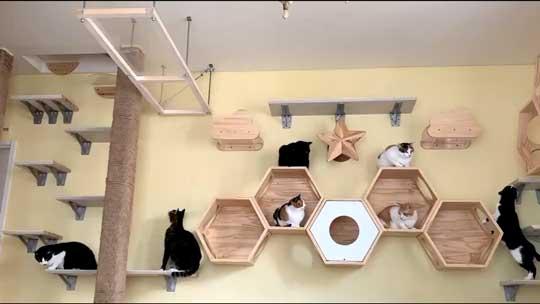 ネコ部屋 猫 落下 ジャンプ 失敗 もらい事故
